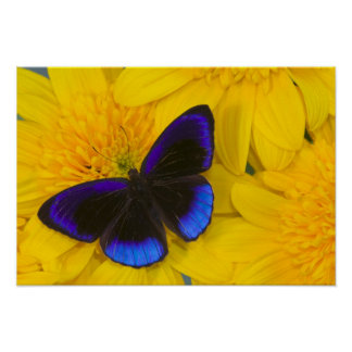 Sammamish Washington Photograph of Butterfly 41 Poster