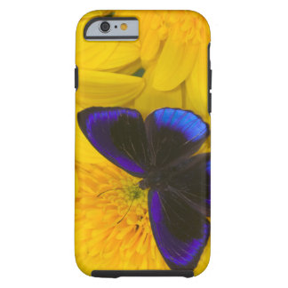 Sammamish Washington Photograph of Butterfly 41 Tough iPhone 6 Case