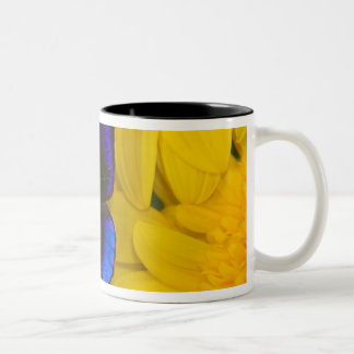 Sammamish Washington Photograph of Butterfly 41 Two-Tone Coffee Mug