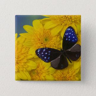 Sammamish Washington Photograph of Butterfly 42 15 Cm Square Badge