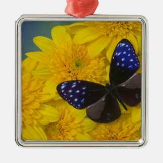 Sammamish Washington Photograph of Butterfly 42 Christmas Ornament