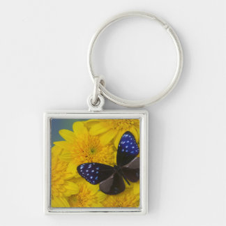 Sammamish Washington Photograph of Butterfly 42 Key Ring