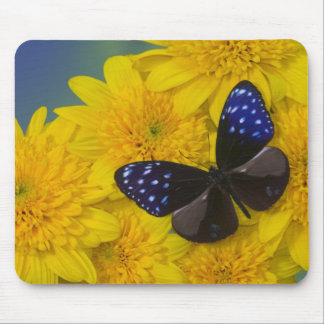 Sammamish Washington Photograph of Butterfly 42 Mouse Mat