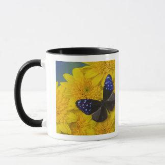 Sammamish Washington Photograph of Butterfly 42 Mug
