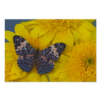 Sammamish Washington Photograph of Butterfly 42 Poster