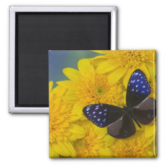 Sammamish Washington Photograph of Butterfly 42 Square Magnet
