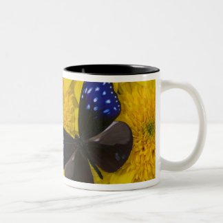 Sammamish Washington Photograph of Butterfly 42 Two-Tone Coffee Mug