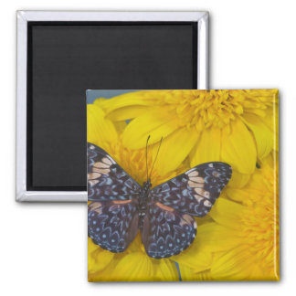 Sammamish Washington Photograph of Butterfly 43 Magnet