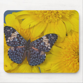Sammamish Washington Photograph of Butterfly 43 Mouse Mat