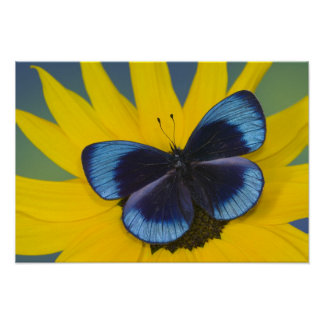 Sammamish Washington Photograph of Butterfly 43 Poster
