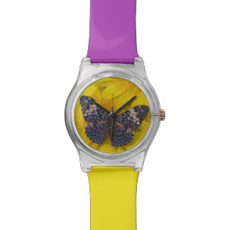 Sammamish Washington Photograph of Butterfly 43 Wrist Watches