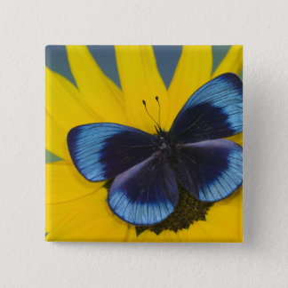 Sammamish Washington Photograph of Butterfly 44 15 Cm Square Badge
