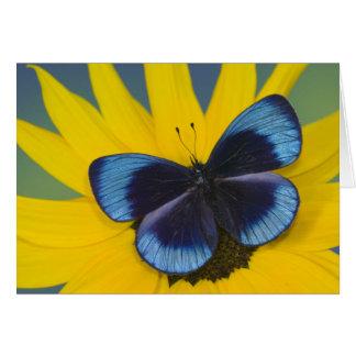 Sammamish Washington Photograph of Butterfly 44 Card