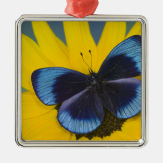 Sammamish Washington Photograph of Butterfly 44 Christmas Ornament