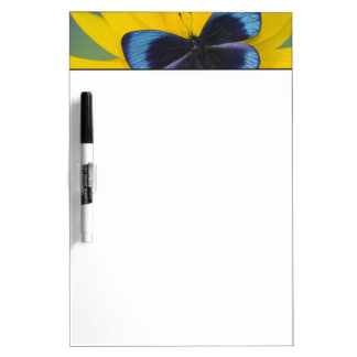Sammamish Washington Photograph of Butterfly 44 Dry Erase Board