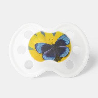 Sammamish Washington Photograph of Butterfly 44 Dummy