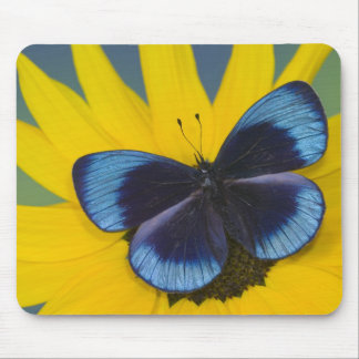 Sammamish Washington Photograph of Butterfly 44 Mouse Mat