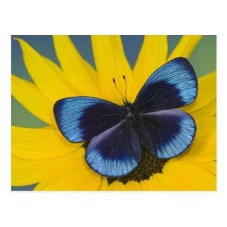 Sammamish Washington Photograph of Butterfly 44 Postcard