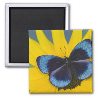 Sammamish Washington Photograph of Butterfly 44 Square Magnet