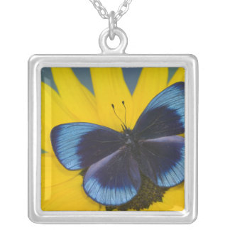 Sammamish Washington Photograph of Butterfly 44 Square Pendant Necklace