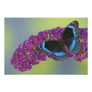Sammamish Washington Photograph of Butterfly 45