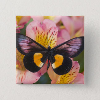 Sammamish Washington Photograph of Butterfly 45 15 Cm Square Badge