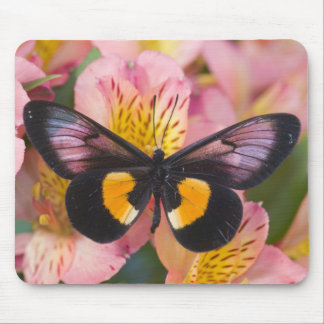 Sammamish Washington Photograph of Butterfly 45 Mouse Mat