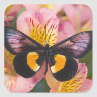 Sammamish Washington Photograph of Butterfly 45 Stickers