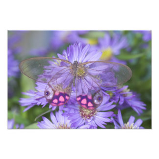 Sammamish Washington Photograph of Butterfly 46