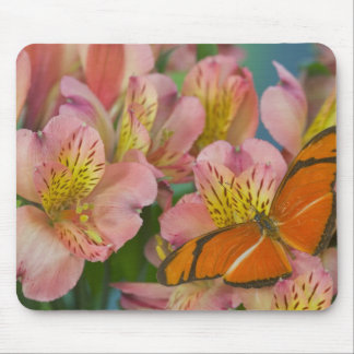 Sammamish Washington Photograph of Butterfly 46 Mouse Mat