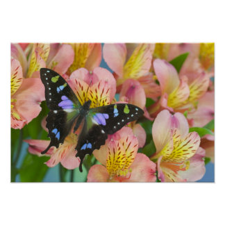 Sammamish Washington Photograph of Butterfly 46 Poster