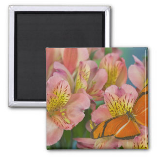 Sammamish Washington Photograph of Butterfly 46 Square Magnet