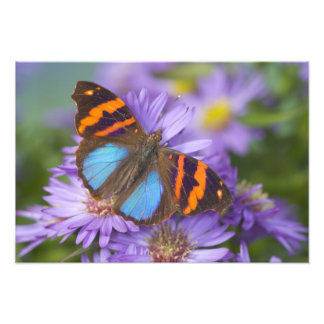 Sammamish Washington Photograph of Butterfly 47