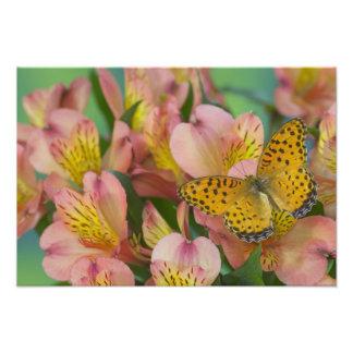 Sammamish Washington Photograph of Butterfly 47