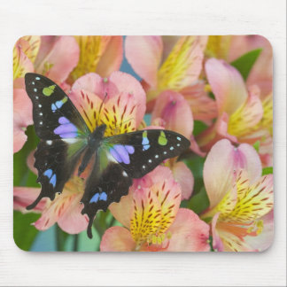 Sammamish Washington Photograph of Butterfly 47 Mouse Mat