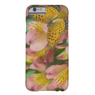Sammamish Washington Photograph of Butterfly 48 Barely There iPhone 6 Case