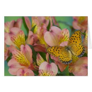 Sammamish Washington Photograph of Butterfly 48 Card