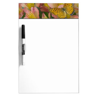 Sammamish Washington Photograph of Butterfly 48 Dry Erase Board
