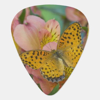 Sammamish Washington Photograph of Butterfly 48 Guitar Pick
