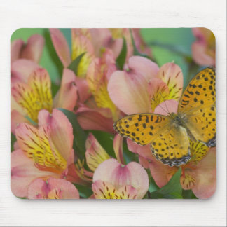 Sammamish Washington Photograph of Butterfly 48 Mouse Mat
