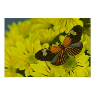 Sammamish Washington Photograph of Butterfly 48 Poster