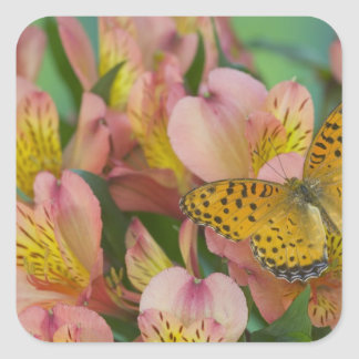 Sammamish Washington Photograph of Butterfly 48 Square Sticker
