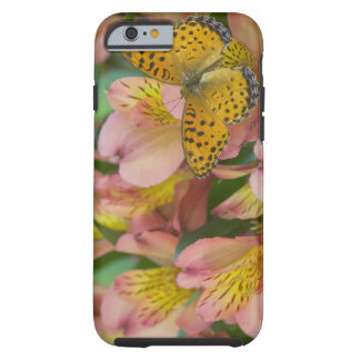 Sammamish Washington Photograph of Butterfly 48 Tough iPhone 6 Case