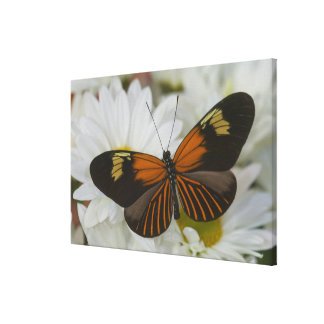 Sammamish Washington Photograph of Butterfly 49 Canvas Print