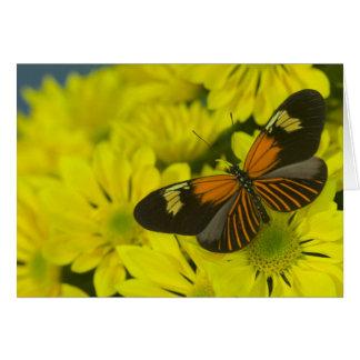 Sammamish Washington Photograph of Butterfly 49 Card