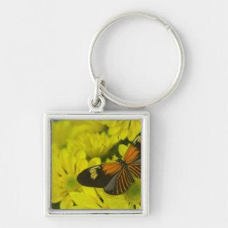 Sammamish Washington Photograph of Butterfly 49 Key Ring