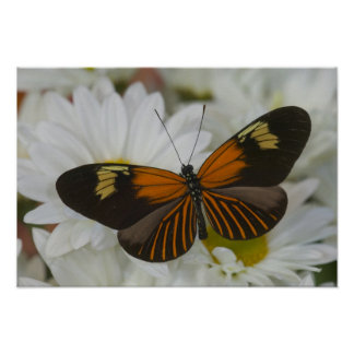 Sammamish Washington Photograph of Butterfly 49 Poster