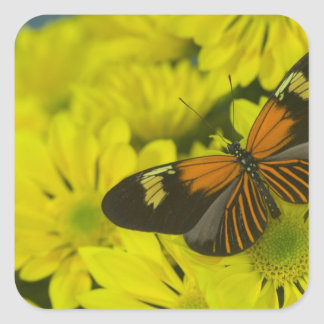 Sammamish Washington Photograph of Butterfly 49 Square Sticker