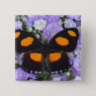 Sammamish Washington Photograph of Butterfly 4 15 Cm Square Badge