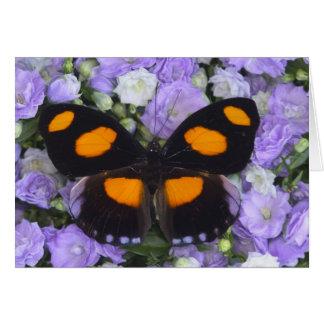 Sammamish Washington Photograph of Butterfly 4 Card